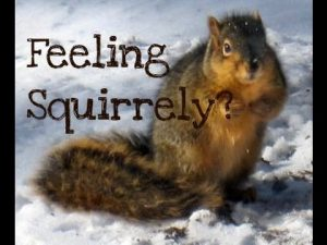 * The Squirrely Among Us