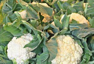 – Creamy Cauliflower